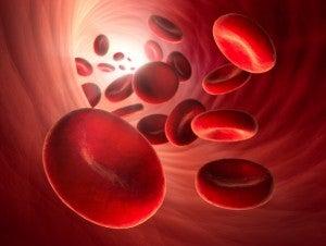 Rote Blutkörperchen in Arterie