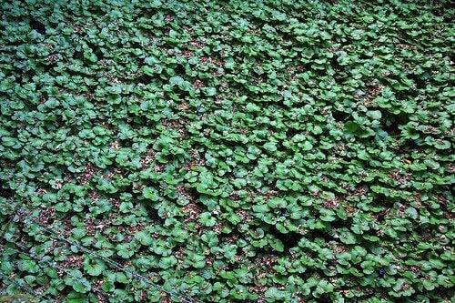 Quais são os benefícios do wasabi para a nossa saúde?