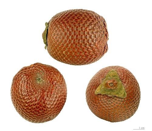 Buriti-miriti entre as frutas com mais vitaminas para sua saúde