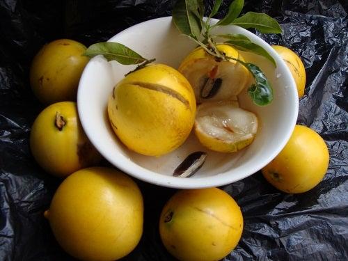 Abiu é uma das frutas que traz mais benefícios a saúde