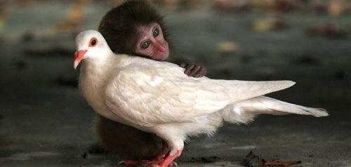 Carinho também cura