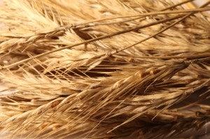 Inclua algum tipo de cereal em sua dieta para fortalecer os ossos