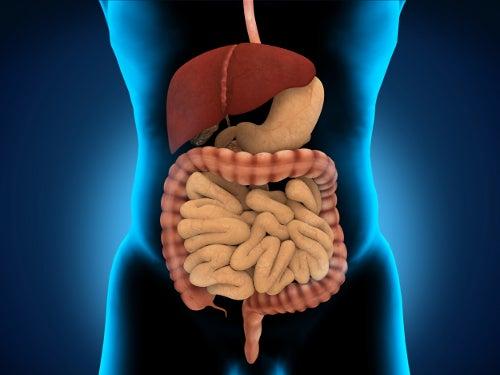 Água melhora o funcionamento do sistema digestivo