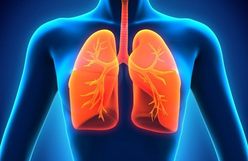 Como limpar os pulmões naturalmente
