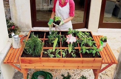 Vários cultivos fáceis para iniciar uma horta em casa