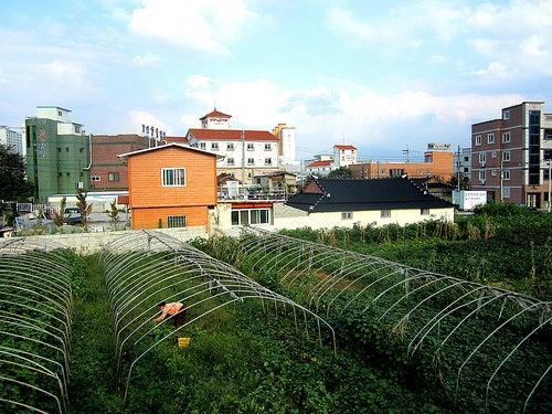horta-organica1