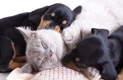 Animais de Estimação: Você  sabe por que são tão bons para a saúde física e mental?