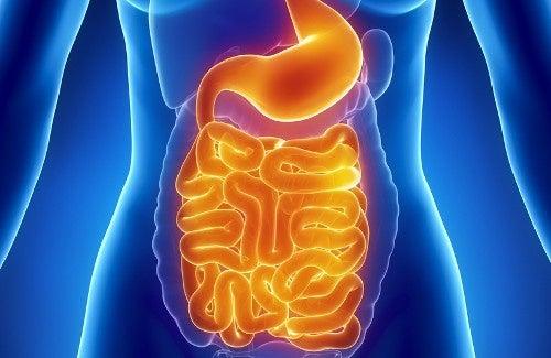 A água morna é muito benéfica para o sistema digestivo