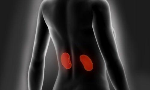 Conselhos para limpar e cuidar dos rins