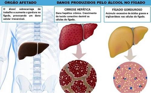 Efeitos que o álcool causa no organismo
