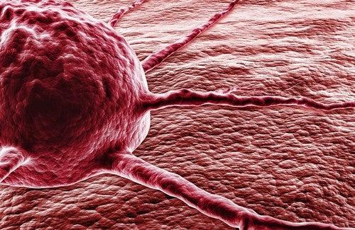 Pimenta-dedo-de-moça contra o câncer: o milagre da capsaicina