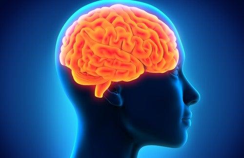Alimentos que potencializam a memória