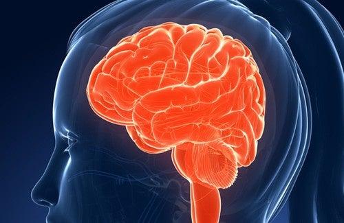 Alimentos que afetam nossa memória e inteligência
