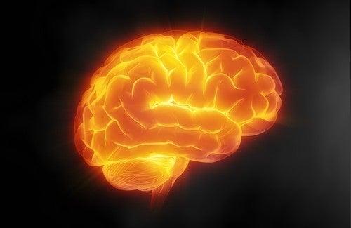 7 dicas para cuidar do cérebro