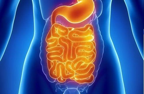 Alimentos ideais para limpar o intestino