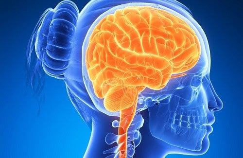 Alimentos que potencializam o cérebro