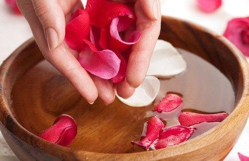 Água de rosas: elaboração e seus maravilhosos benefícios