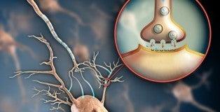Sistema-nervoso-500x325