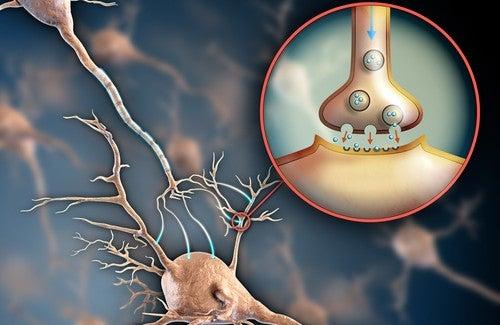6 maneiras de fortalecer o sistema nervoso