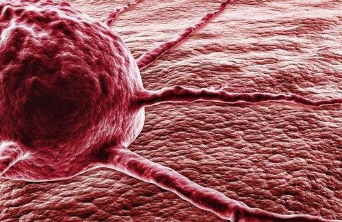 Pimenta dedo-de-moça contra o câncer: o milagre da capsaicina