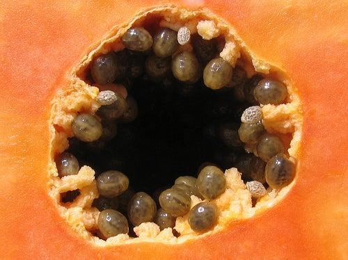 Mamão para eliminar os parasitas