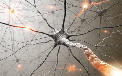 Plantas medicinais para melhorar a memória