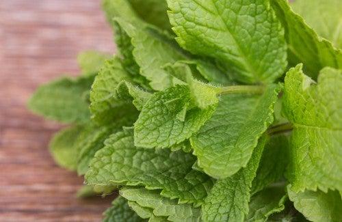 5 benefícios de consumir hortelã