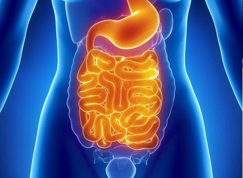 Limpeza intestinal