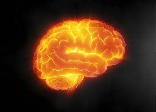 Benefícios da água oara o cérebro