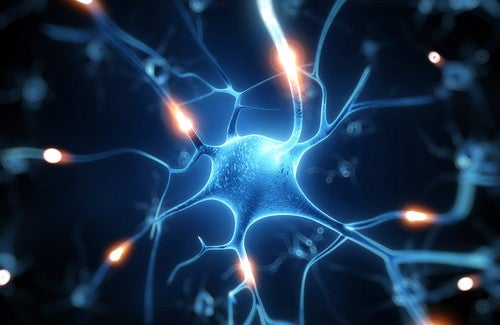 Resveratrol: um excelente escudo para o seu cérebro