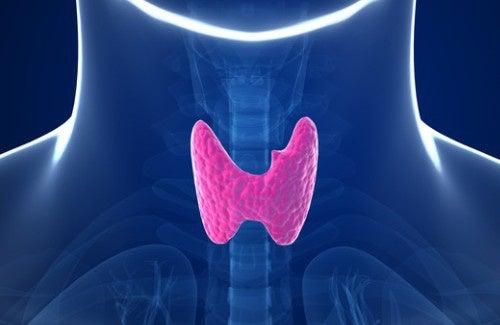 5 hábitos que alteram a tireoide