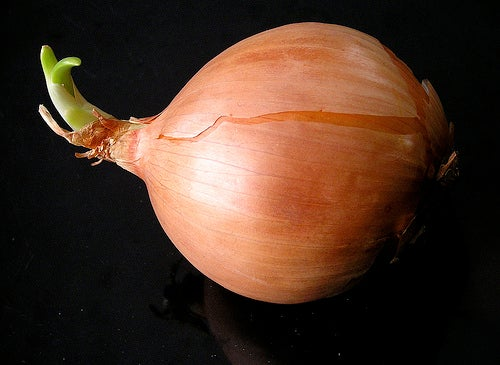 cebolla-muffet
