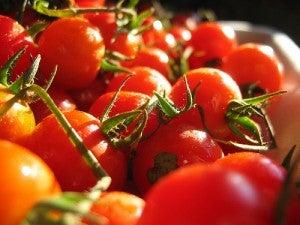 Os tomates agem como ótimos laxantes naturais