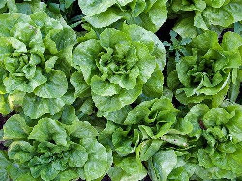 Vegetais de folhas verdes são ricos em vitaminas para a pele