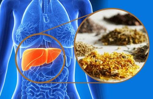 Ervas medicinais para limpar o fígado