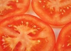 Tomate-500x325
