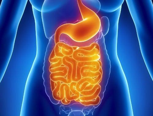 Estômago e intestino