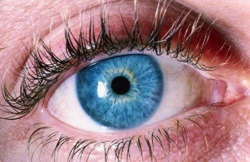 Olhos bem maquiados realçam a beleza