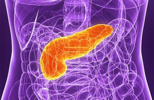 5 conselhos para cuidar do pâncreas