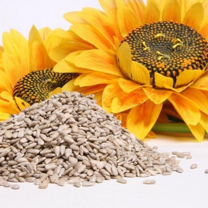 sementes-girassol-01