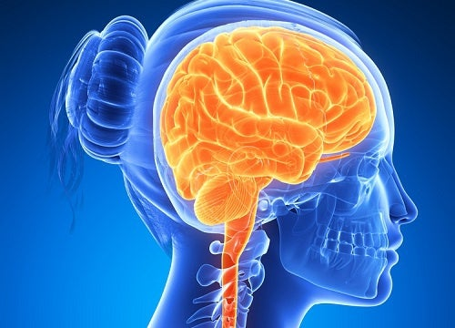 Seis alimentos para manter o cérebro ativo