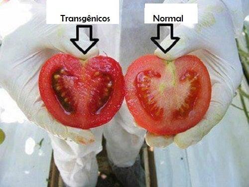 Quais são os perigos dos alimentos transgênicos