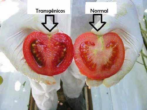 Alimentos transgênicos: quais são seus perigos?