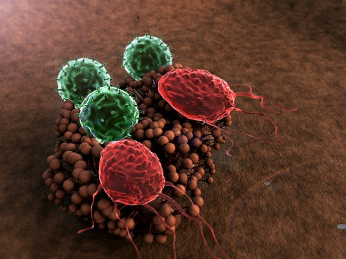 8 coisas que prejudicam o sistema imunológico