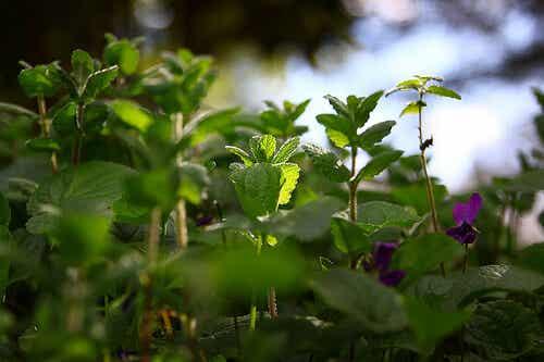 7 poderosas ervas medicinais