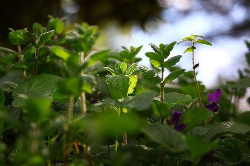 menta-james-jardine