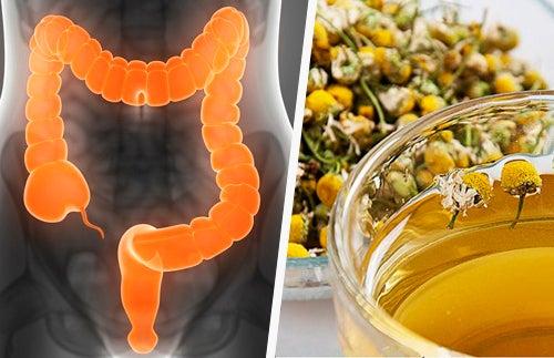 Limpar o intestino