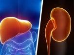 Manter-o-fígado-e-rins-saudáveis