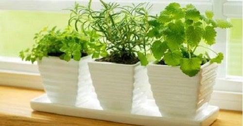 Plantas que atraem energias positivas