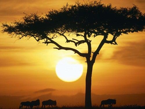 Mulher humilhada por seus glúteos teve sem fim na Africa